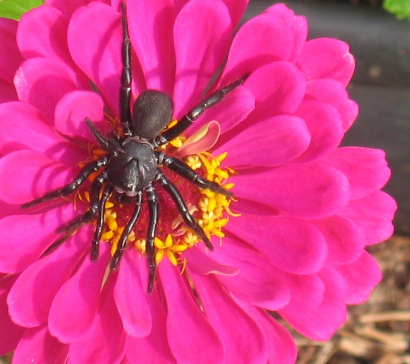 http://www.lesjones.com/images/posts/spiderflower.jpg