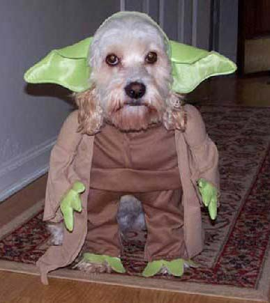 Quelques droleries starwarsienne en images - Page 3 Dogyoda