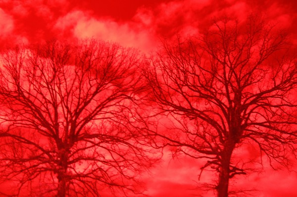 Infrared Trees and Sky