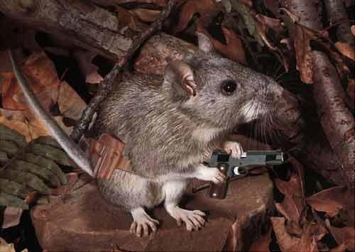 mousegun.jpg